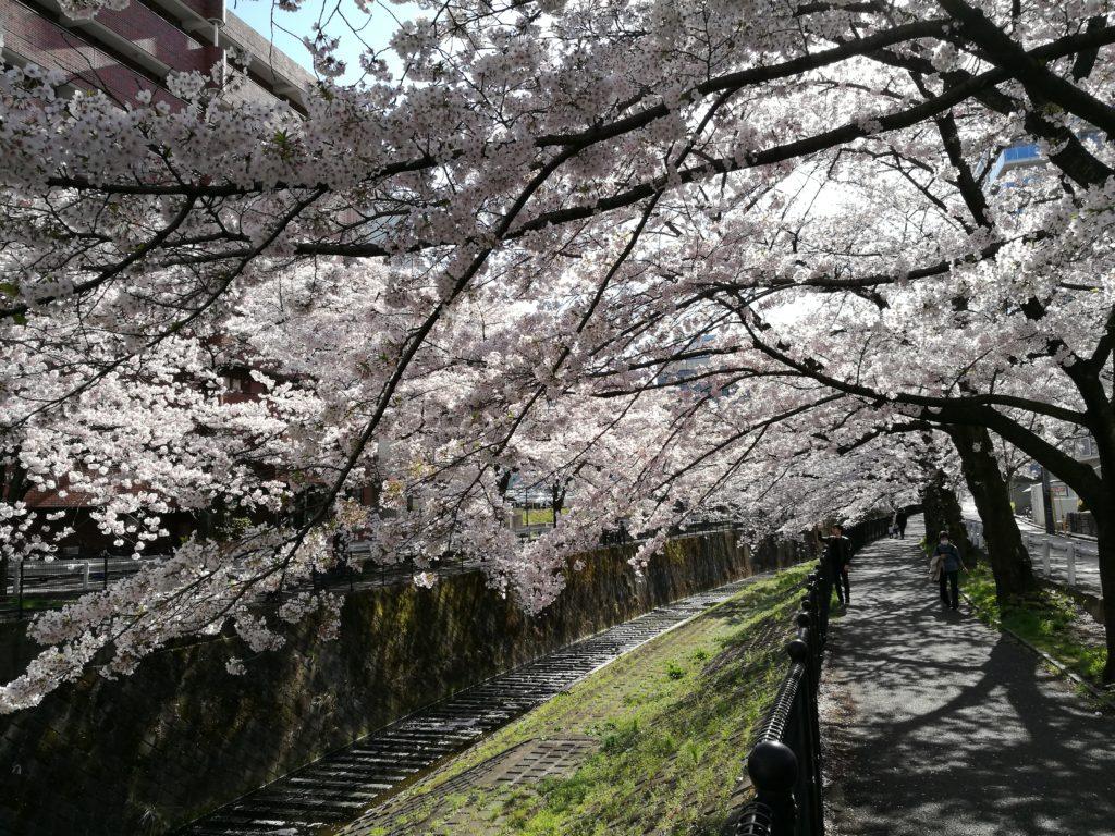 HUAWEI P9で撮った桜